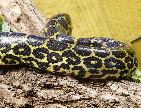 Dark Tigerpython Textures Serpent Backgrounds Pyth