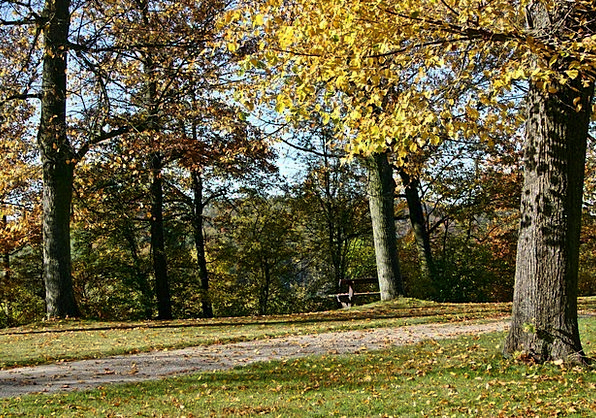 Park Common Landscapes Absent Nature Autumn Fall A