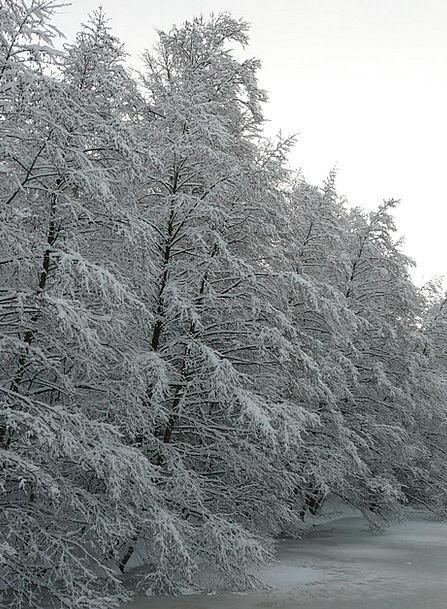 Snowy Snow-white Season Wintry Chilly Winter Snow
