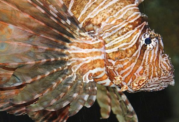 Fish Angle Meeresbewohner Aqquarium