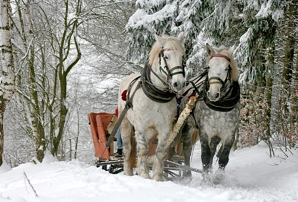 Sleigh Ride Landscapes Cattle Nature The Horse Hor