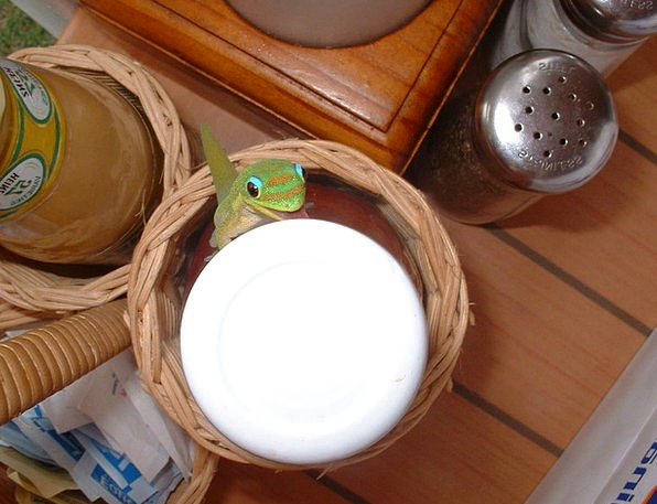 Gecko Mealtime Lizard Breakfast Creature Being Cha
