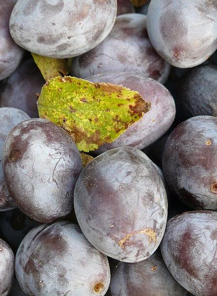 Real Plum Drink Desirable Food Prunus Domestica Pl