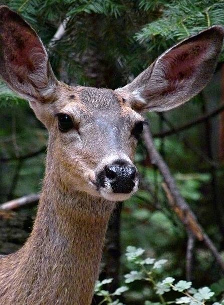 Deer Physical Closeup Animal Nature Wild Rough For