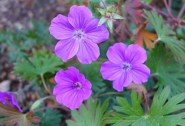 Flowers Plants Landscapes Nature Nature Countrysid