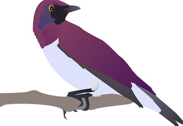 Birds Natures Elaborate Stting Purple Pink Tree Sa