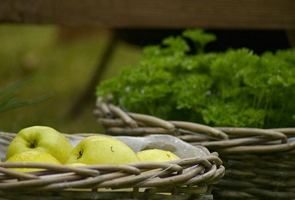 Apples Drink Nourishment Food Fruit Ovary Food Nat