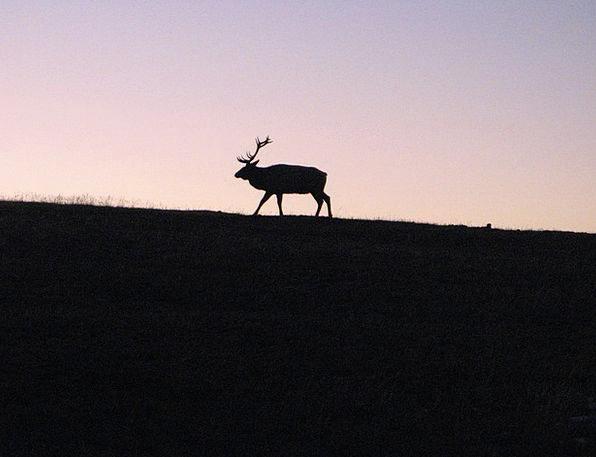 Elk Landscapes Crag Nature Mountain Meadow Mountai