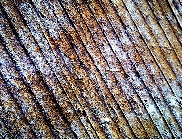 Wood Timber Landscapes Ounce Nature Structure Cons