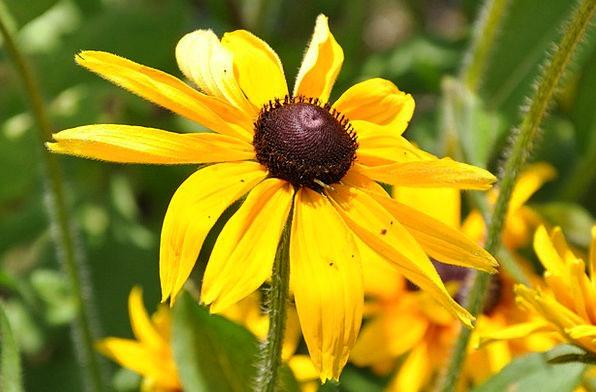 Flowers Plants Landscapes Creamy Nature Floral Flo