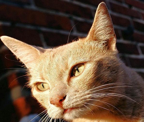 Cat Feline Representation Female Feminine Portrait