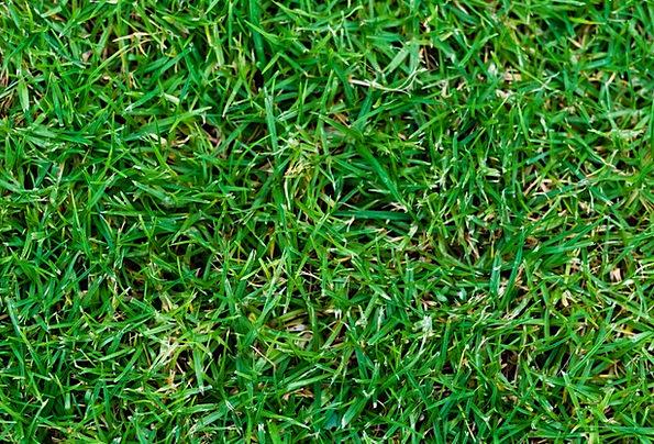 Grass Textures Lime Backgrounds Texture Feel Green