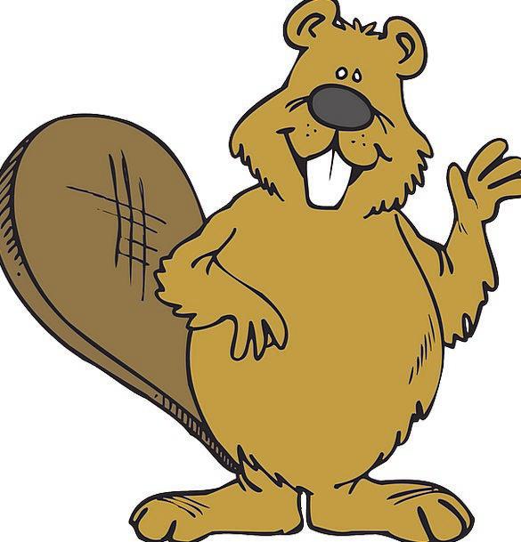 Beaver Work Physical Friendly Welcoming Animal Wav