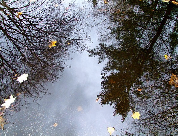 Water Aquatic Landscapes Piece Nature Nature Count
