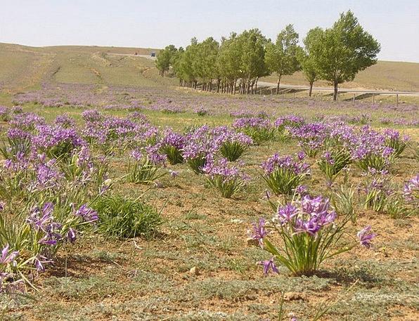 Iris Landscapes Azure Nature Flower Floret Blue Pl