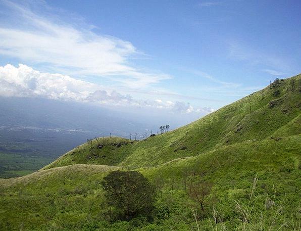 The Meadow Grassland Java Savanna East Mount Indon