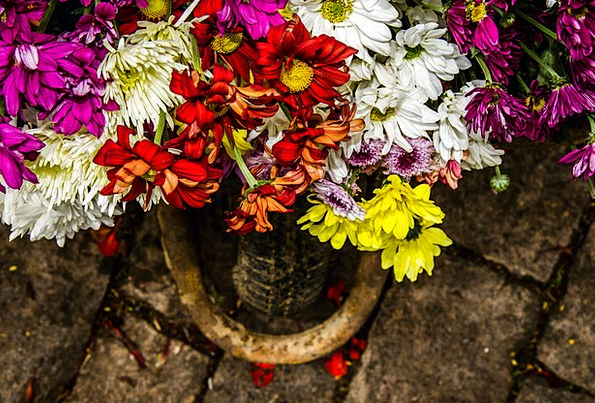 Carriole Plants Flower Floret Flowers Decoration B