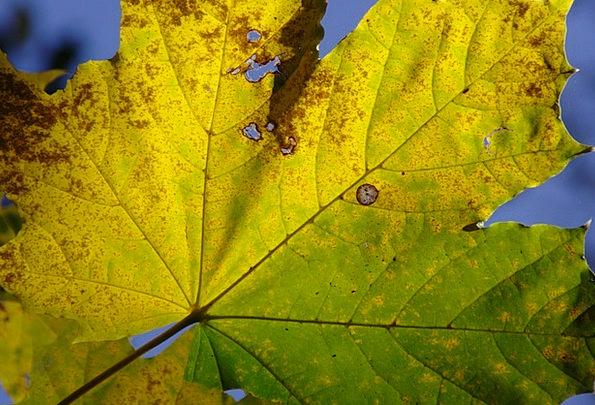 Autumn Fall Golden Autumn Fall Foliage Leaves Gree
