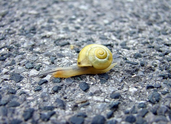 Snail Ground Paved Cemented Floor Crawling Swarmin