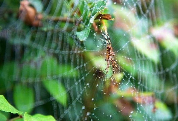 Spider Web Web Mesh Spider Scary Spiderweb Cobweb