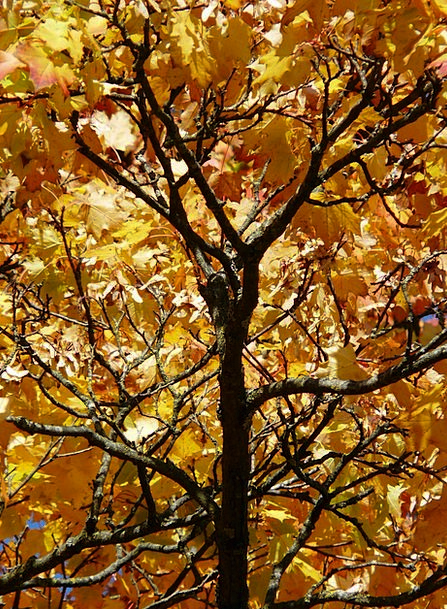 Branches Twigs Artistic Autumn Fall Aesthetic Emer