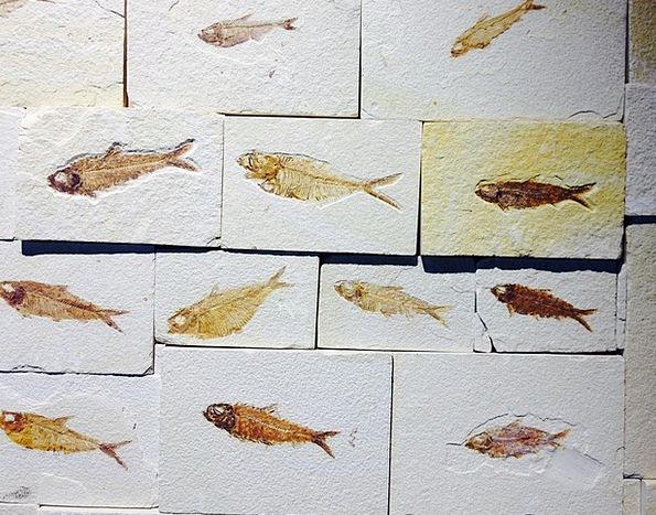 Fossil Relic Pebble Fish Angle Stone Petrification