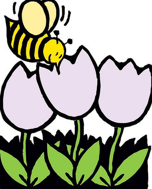 Bees Flowers Honeybee Yellow White Snowy Bumblebee