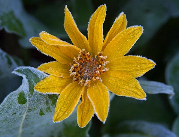 Sun Flower Landscapes Nature Ice Frost Color Icy F
