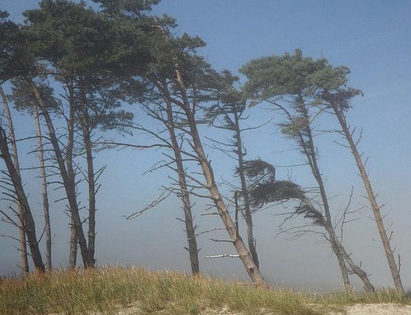 Windfluechter Vacation Breeze Travel Trees Plants