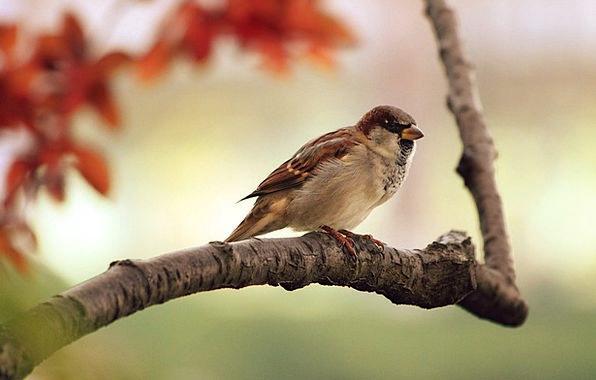 Sparrow Sapling Branch Division Tree Bird Fowl