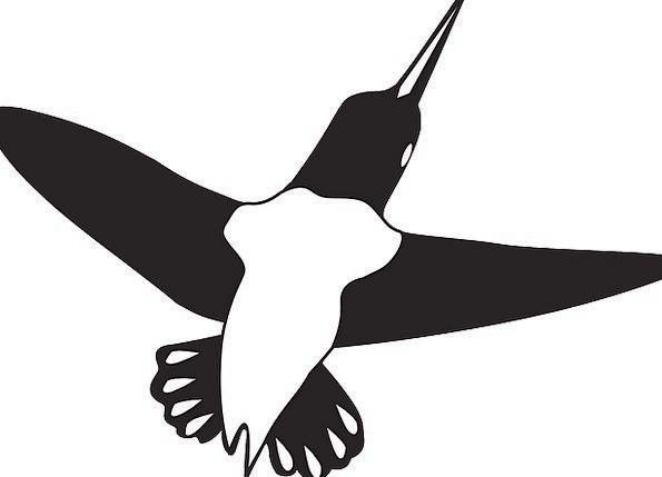 Bird Fowl Hovering Wings Annexes Flying Hummingbir