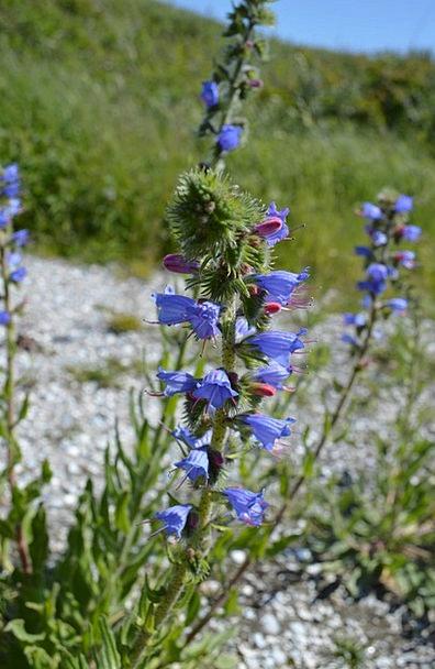 Plant Vegetable Landscapes Floret Nature Blue Azur