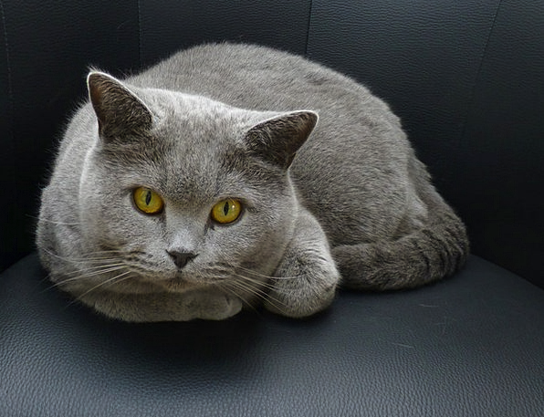 Cat Feline Lurking Prowling «Top» Eyes Judgments C