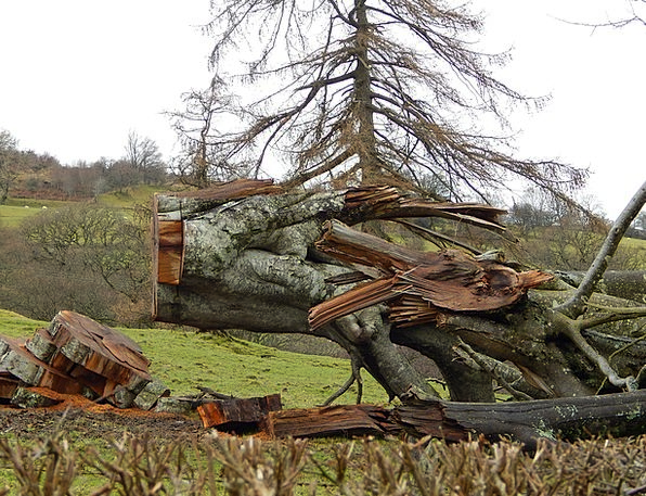 Fallen Tree Storm Damage Injury Hurricane Bird In