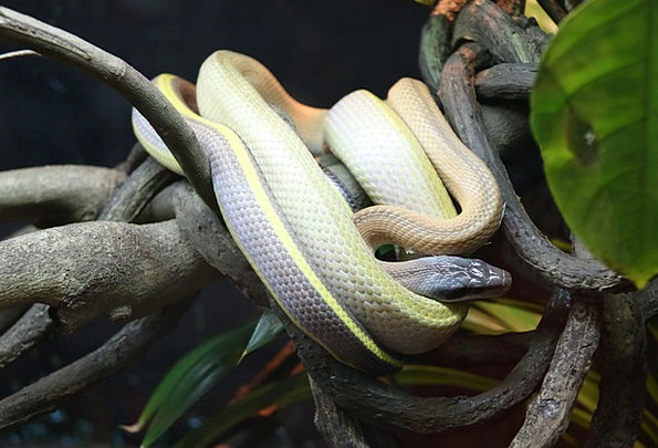 Snake Division Animal Physical Branch Nature Count