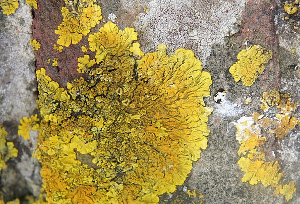 Lichen Pillar Stone Pebble Rock Yellow Creamy Clos