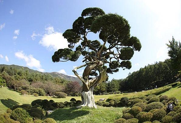 Wood Timber Pine Long Arboretum Blue Azure Grass S