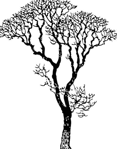 Deciduous Tree Sapling Deciduous Tree Tree Branche
