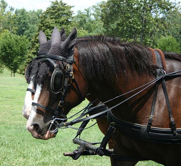 Horses Cattle Craft Employed Industry Hackney Work