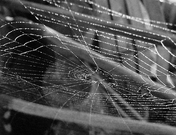 Cobweb Landscapes Nature Spider Spider Web Spider-