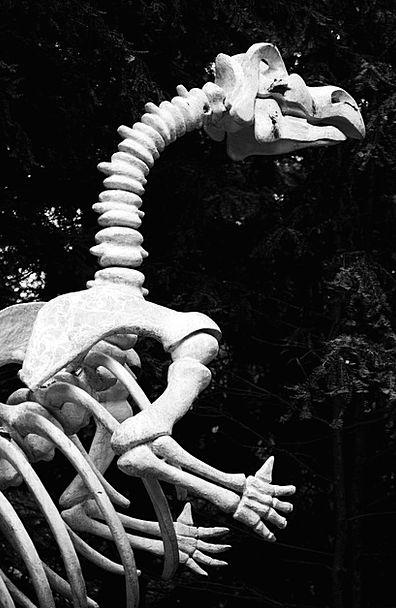 Animal Physical Jawbone Bones Frames Bone Jurassic