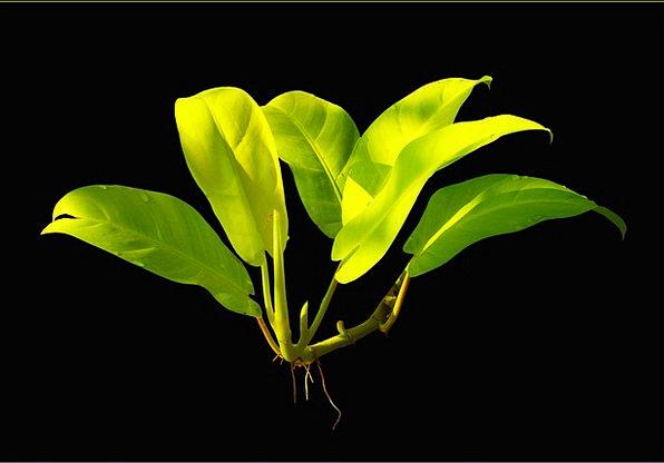 Journal Periodical Leaves Greeneries Green Leaf Ae