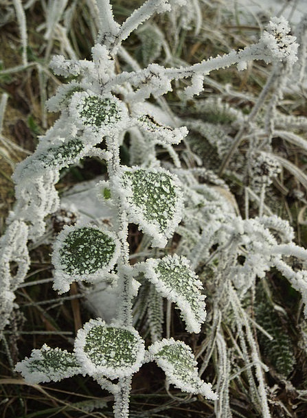 Winter Season Ice Frozen Ice-covered Frost