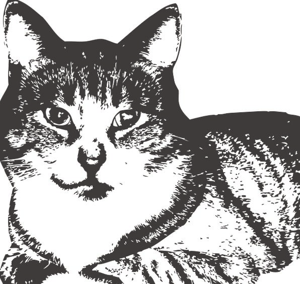 Cat Feline Physical Pet Domesticated Animal Kitten