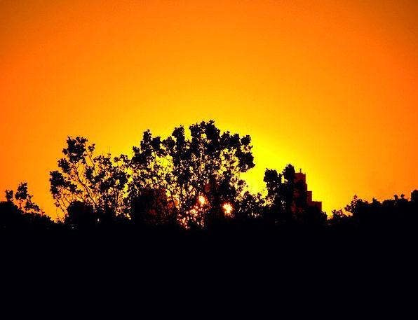 Sunset Sundown Vacation Plants Travel Silhouette O