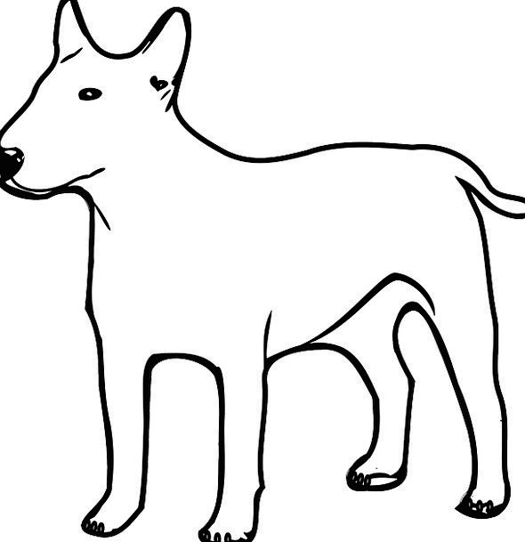 Dog Canine Snowy Animal Physical White Standing Ma