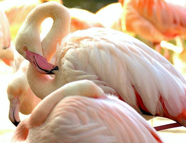 Flamingo Landscapes Menagerie Nature Pink Flamingo