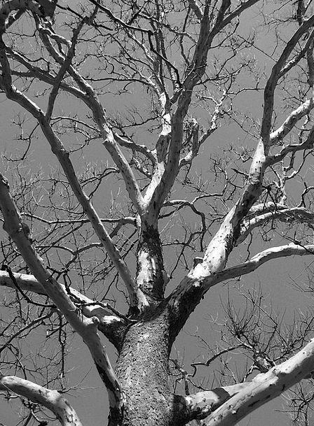 Tree Sapling Landscapes Deceased Nature Winter Sea