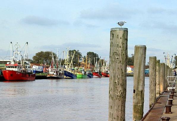 Büsum Harbor Ship Vessel Port Seagull Ships Coast
