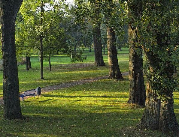 Trees Plants Park Common Poplars Main Chief Main M
